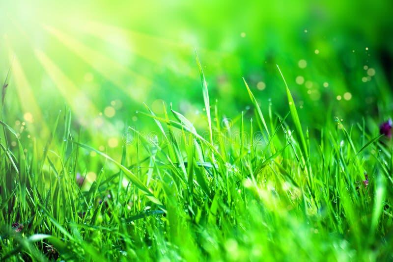 Hierba y luz del sol fotografía de archivo libre de regalías