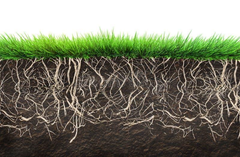 Hierba y suelo libre illustration