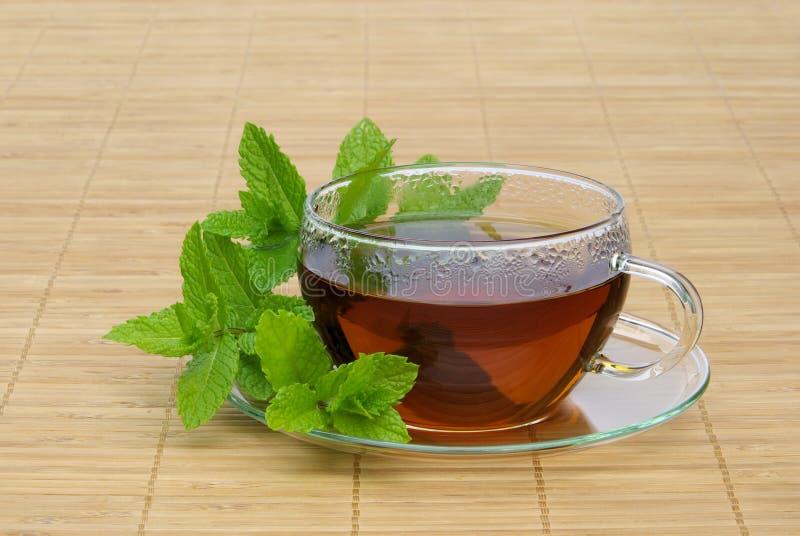 Hierbabuena del té imágenes de archivo libres de regalías