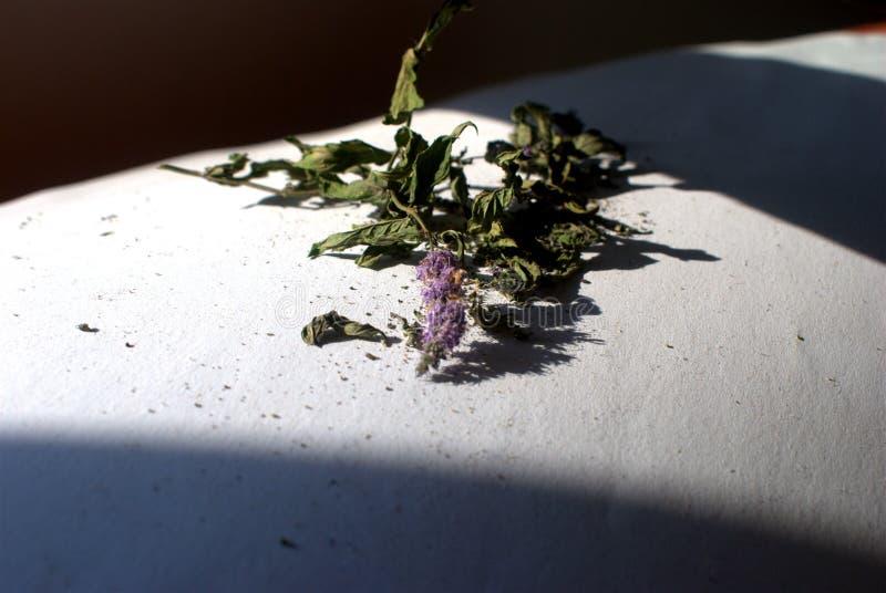 Hierbabuena - en un blanco - fondo oscuro secado, aislado imagenes de archivo