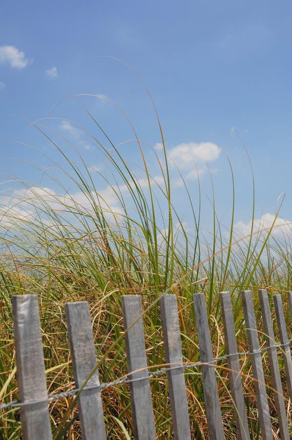 Hierbas altas de la playa fotografía de archivo libre de regalías