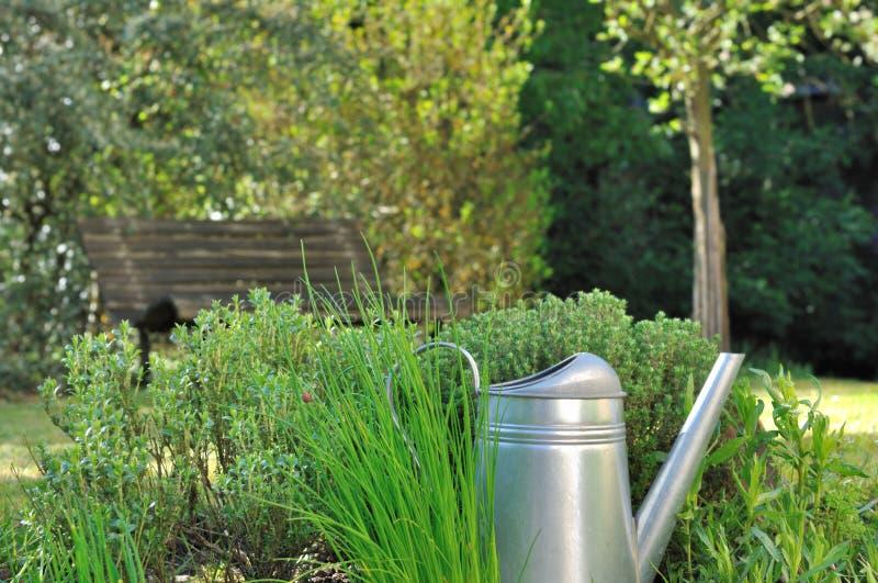 Hierbas aromáticas en jardín foto de archivo libre de regalías