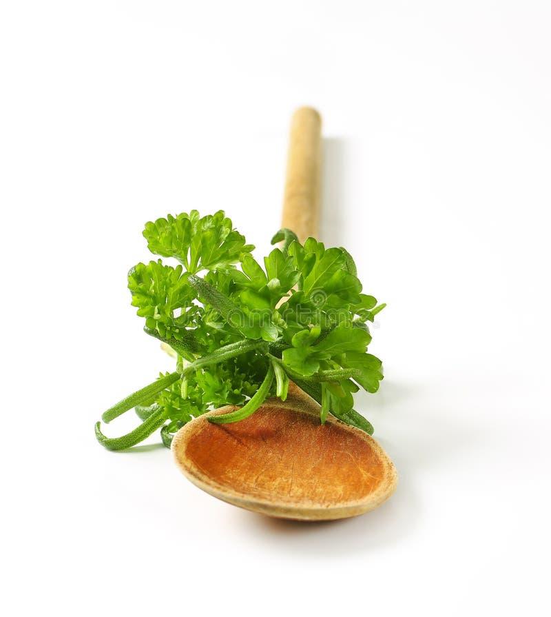 Hierbas culinarias frescas y cuchara de madera foto de archivo libre de regalías