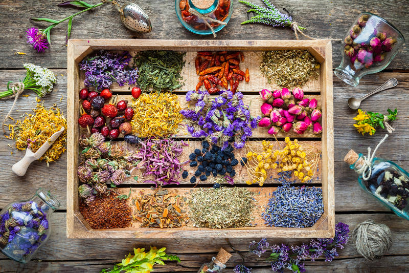 Hierbas curativas en la caja de madera, medicina herbaria fotos de archivo libres de regalías