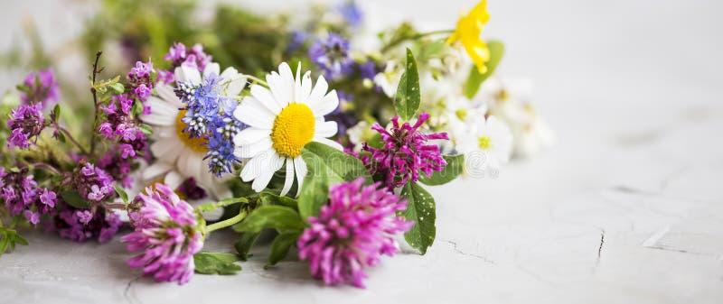 Hierbas curativas Ramo de las plantas medicinales y de las flores con la menta, c imagen de archivo
