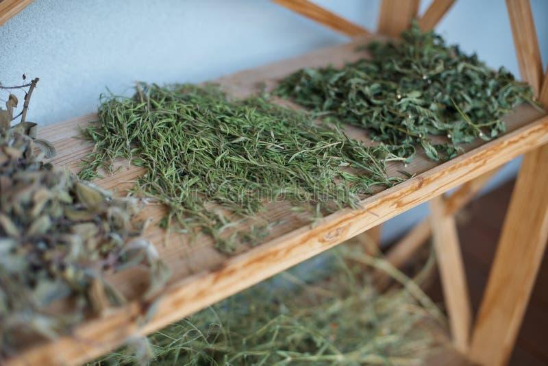 hierbas de curación que se secan en el estante El perforatum herbario de Medicine foto de archivo