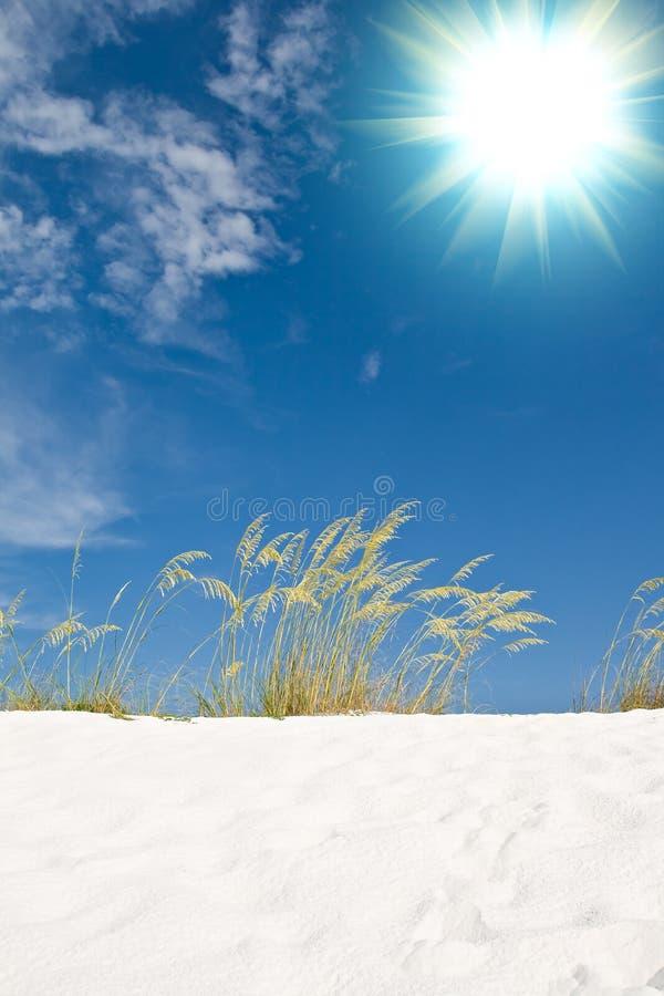 Hierbas de la duna de arena de la playa imagen de archivo