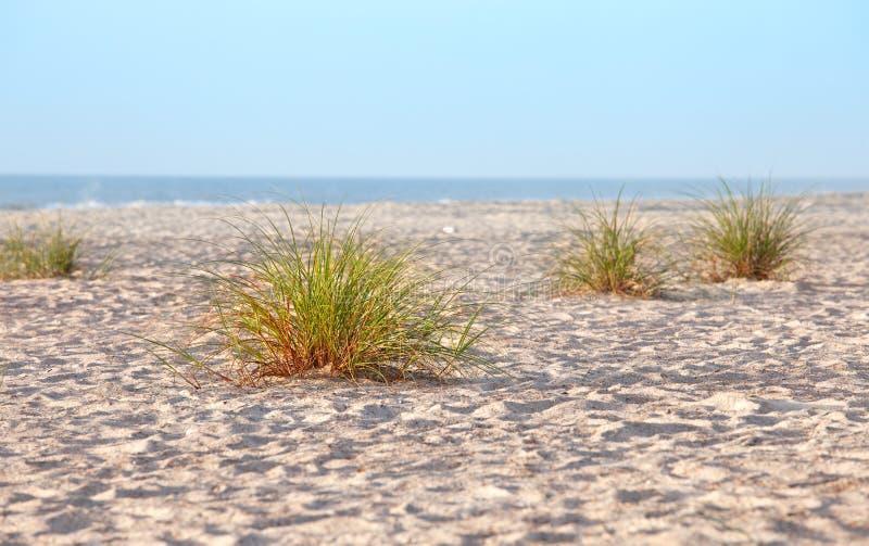 Hierbas de la duna de arena de la playa foto de archivo libre de regalías