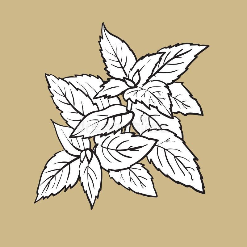 Hierbas de las aceitunas, de la menta y del romero, especias, ingredientes, ejemplo del vector del bosquejo stock de ilustración