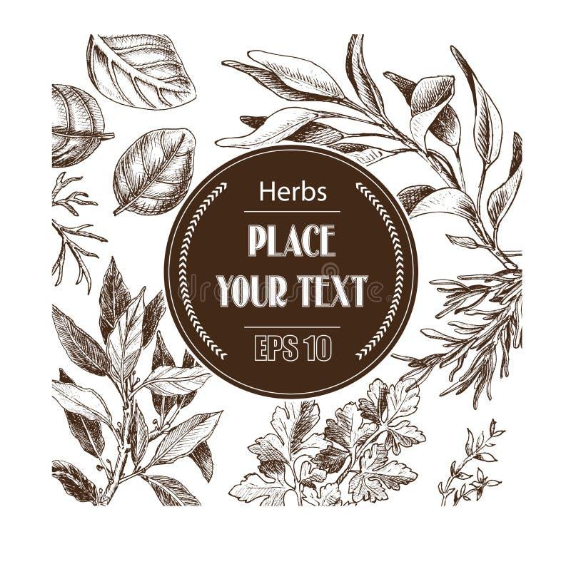 Hierbas del bosquejo del fondo del vector Hierbas - hoja de laurel, eneldo, tomillo, sabio, romero, albahaca, perejil, arugula libre illustration