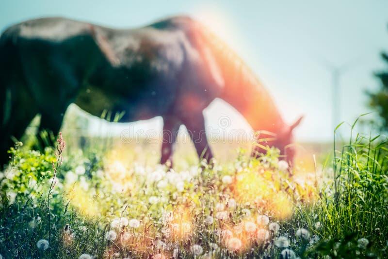 Hierbas del pasto del verano del caballo, al aire libre imagenes de archivo
