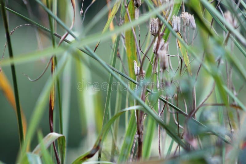 Hierbas en el jardín inglés, primer, con la lavanda y los pequeños flowes 8 imagen de archivo libre de regalías