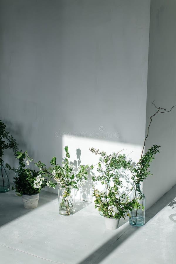 Hierbas en las botellas de cristal cerca de la pared blanca La sombra de la ventana en la pared pared blanca y piso blanco imagenes de archivo