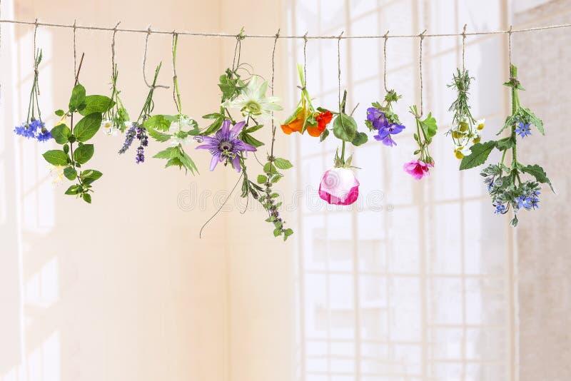 Hierbas flovouring frescas y flores comestibles que cuelgan en una secuencia, delante de un backgroung blanco fotografía de archivo
