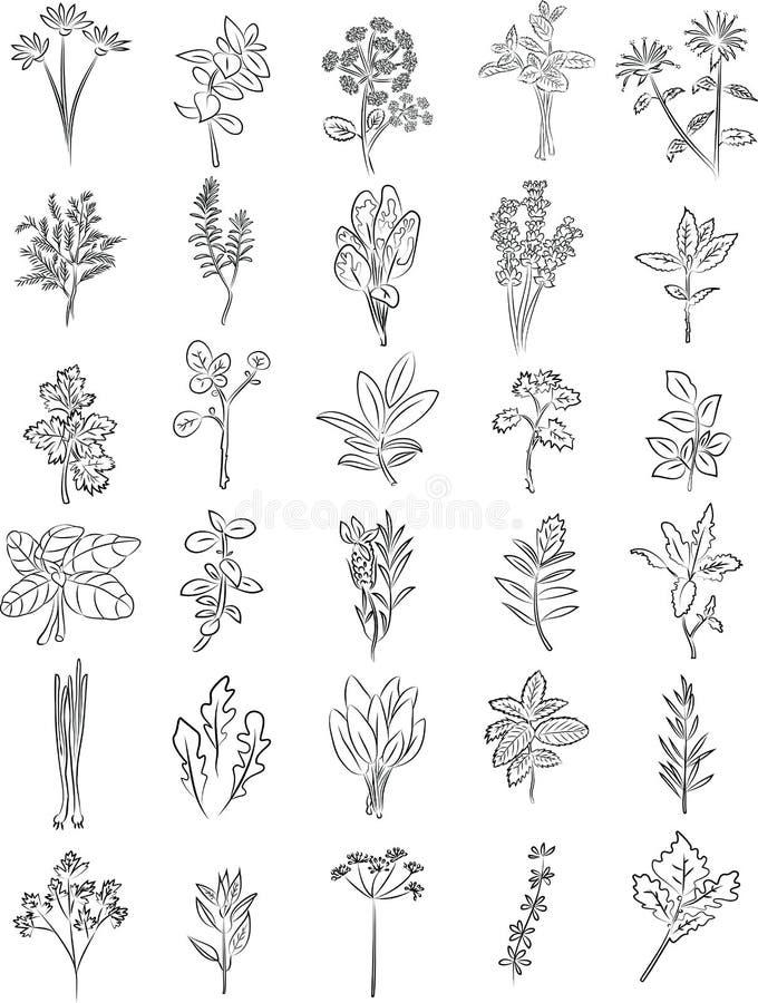 Hierbas frescas stock de ilustración