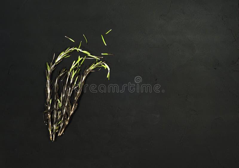 Hierbas frescas del romero en fondo negro Hierbas aromáticas sanas culinarias fotos de archivo libres de regalías