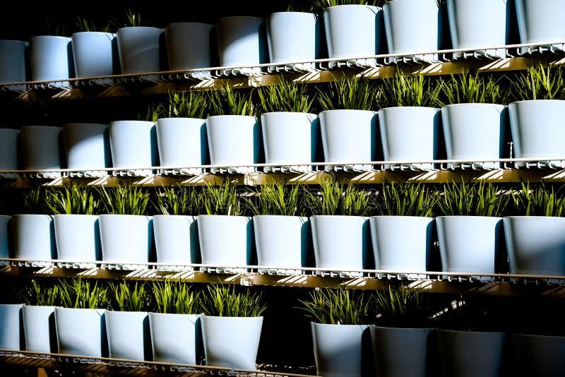 Hierbas frescas en potes de cerámica Diversos tipos de plantas de la especia en potes de cerámica imagen de archivo