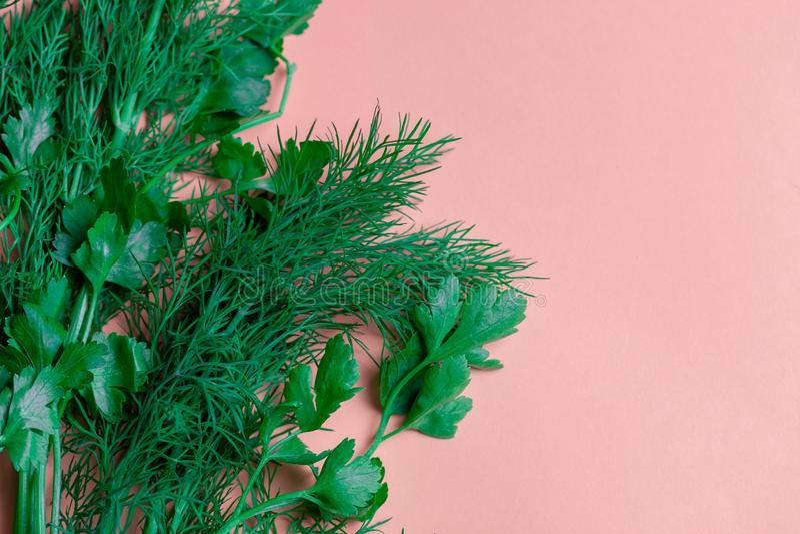 Hierbas frescas eneldo, perejil en el fondo de papel coralino Visión superior Copie el espacio imagen de archivo libre de regalías