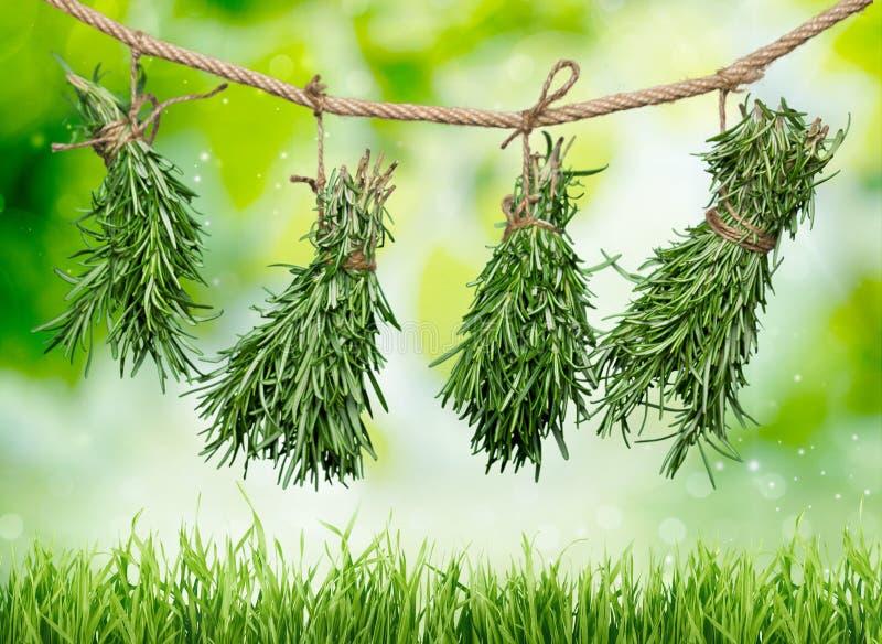 Hierbas frescas que cuelgan en fondo borroso fotografía de archivo