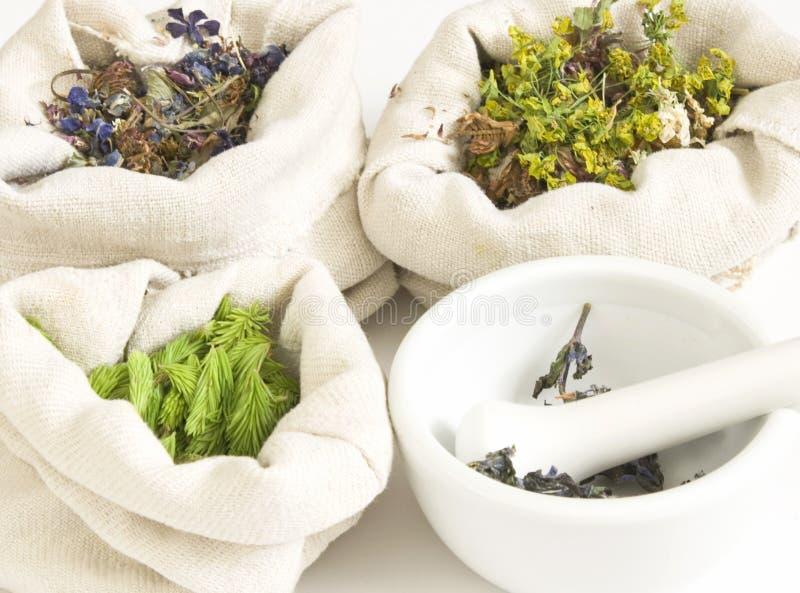 Hierbas herbarias, medicinales   imagen de archivo libre de regalías