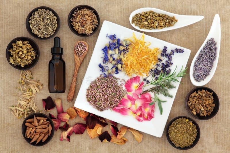 Hierbas mágicas y medicinales foto de archivo