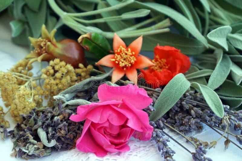 Hierbas medicinales frescas del jardín para hacer los cosméticos naturales y orgánicos fotos de archivo