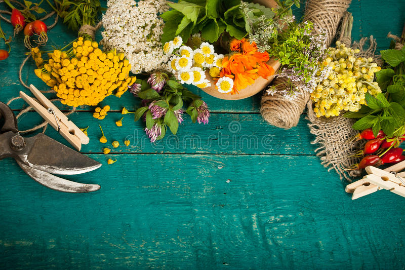 Hierbas medicinales frescas del verano en el fondo de madera imagen de archivo