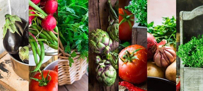 Hierbas orgánicas frescas determinadas de las verduras del collage Tomates maduros, rábano, habas verdes, alcachofas, tomillo, pe foto de archivo libre de regalías