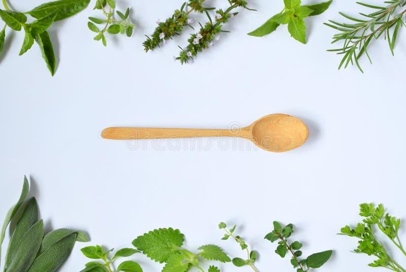 Hierbas picantes y medicinales frescas en el fondo blanco y la cuchara de madera Frontera de la diversa hierba - romero, orégano, fotos de archivo libres de regalías
