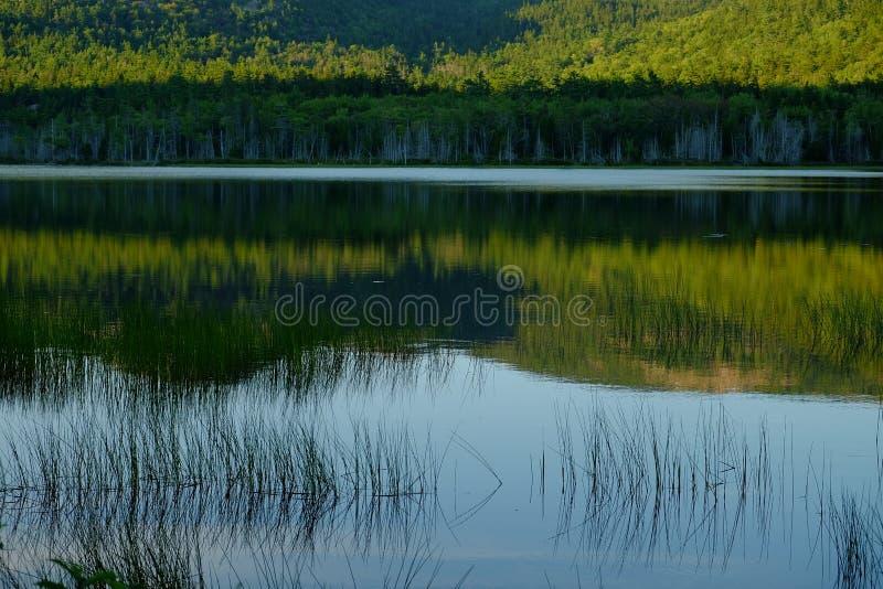 Hierbas que crecen en un lago reflexivo tranquilo con la montaña y el árbol fotos de archivo libres de regalías