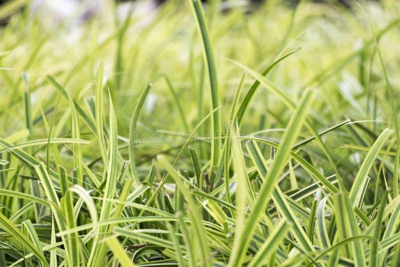 Hierbas verdes del foco suave fotografía de archivo libre de regalías