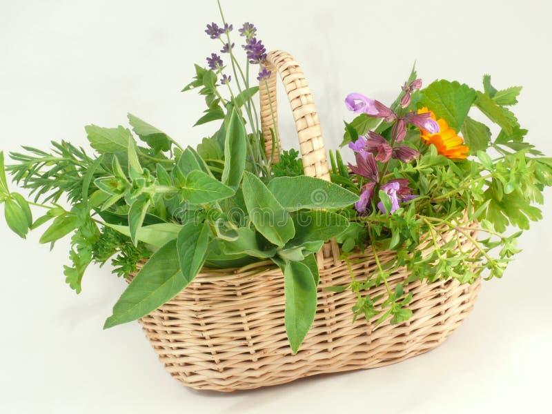 Hierbas verdes, frescas foto de archivo libre de regalías