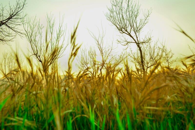 Hierbas verdes y amarilleadas fotos de archivo