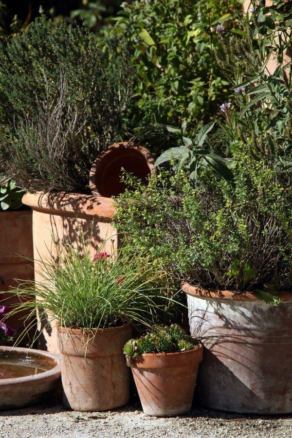 Hierbas y aromas en potes en la terraza del verano imagenes de archivo