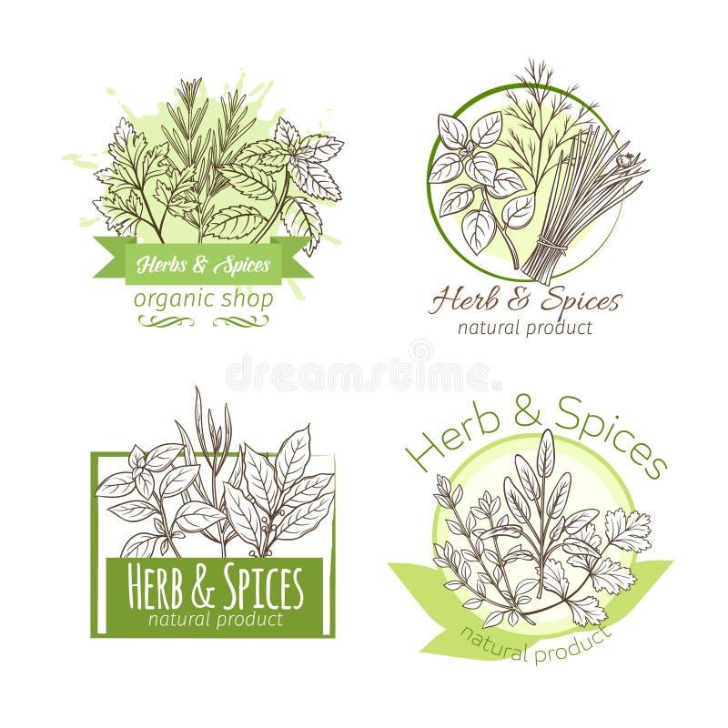 Hierbas y especia dibujadas mano libre illustration