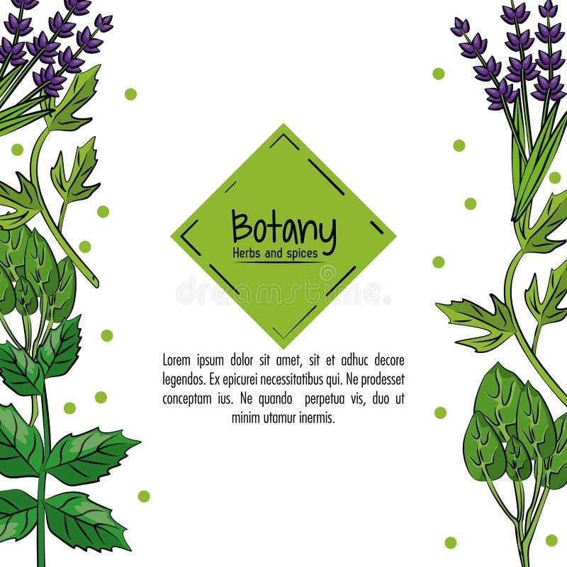 Hierbas y especias de la botánica stock de ilustración