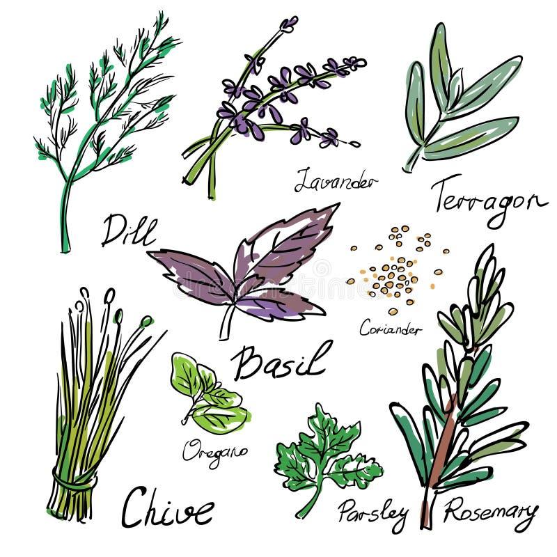 Hierbas y especias de la cocina Iconos dibujados mano del bosquejo stock de ilustración