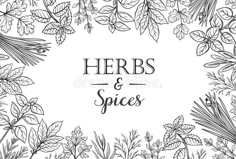 Hierbas y especias fijadas libre illustration