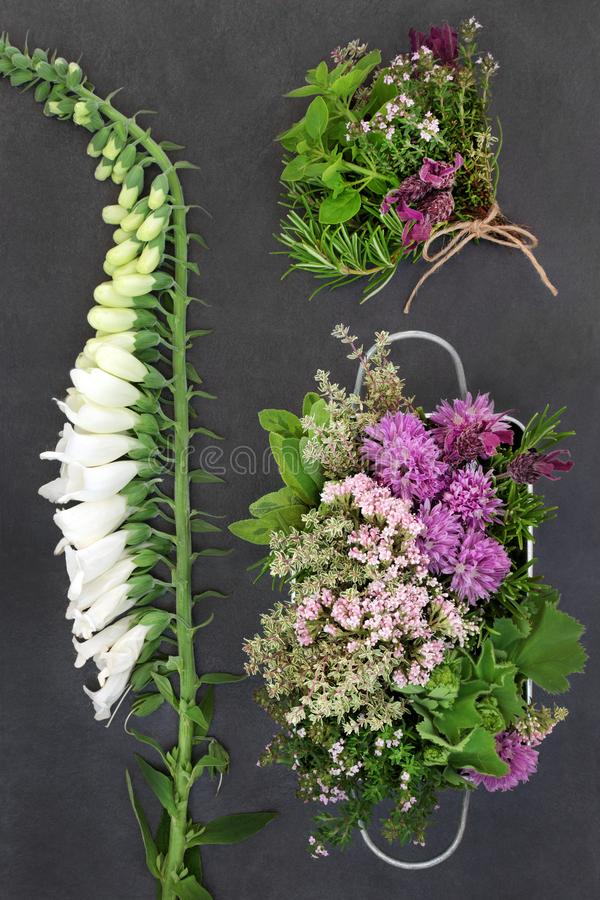 Hierbas y flores medicinales fotos de archivo libres de regalías