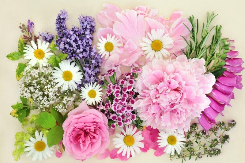 Hierbas y flores para la medicina herbaria imagenes de archivo