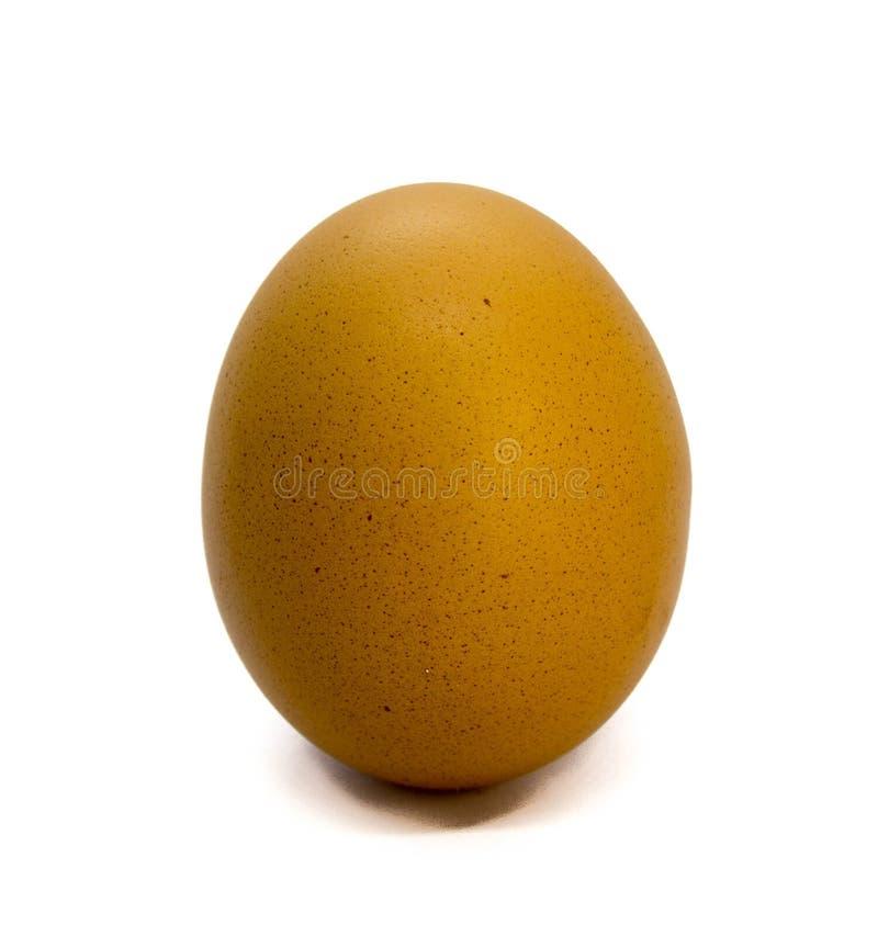 Hierva el huevo, huevo del pollo, fotos de archivo libres de regalías