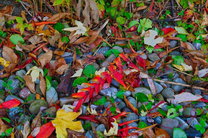 High angle closeup shot of colorful autumn leaves fallen on the beautiful stones - cool wallpaper. A high angle closeup shot of colorful autumn leaves fallen on stock photography
