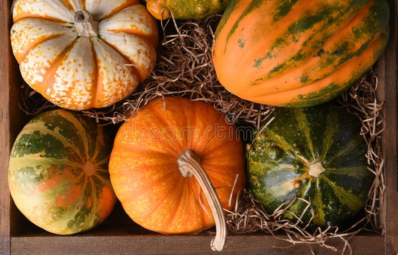 High angle closeup shot of a group of autumn gourds, squash and pumpkins in a wood box.  royalty free stock photo