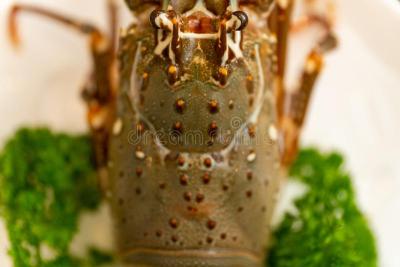 High angle closeup shot of lobster with parsley on a white plate royalty free stock photo