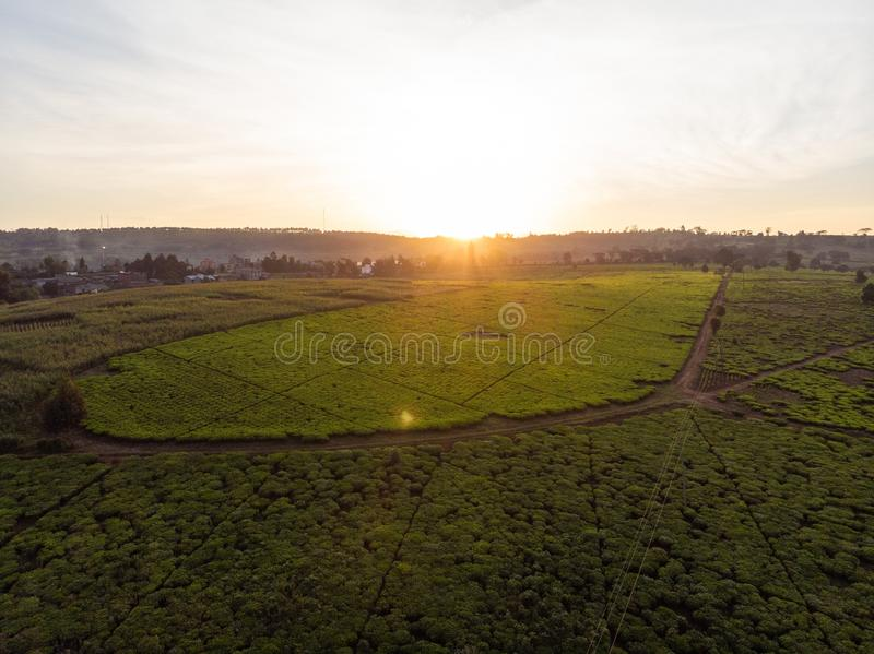 High angle shot of beautiful green fields with the sunset in the background in Nairobi, Kenya. A high angle shot of beautiful green fields with the sunset in the royalty free stock photo
