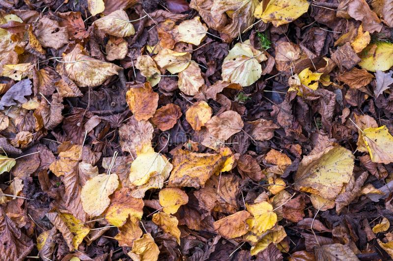 High angle shot of fallen dry autumn leaves on the ground. A high angle shot of fallen dry autumn leaves on the ground royalty free stock image