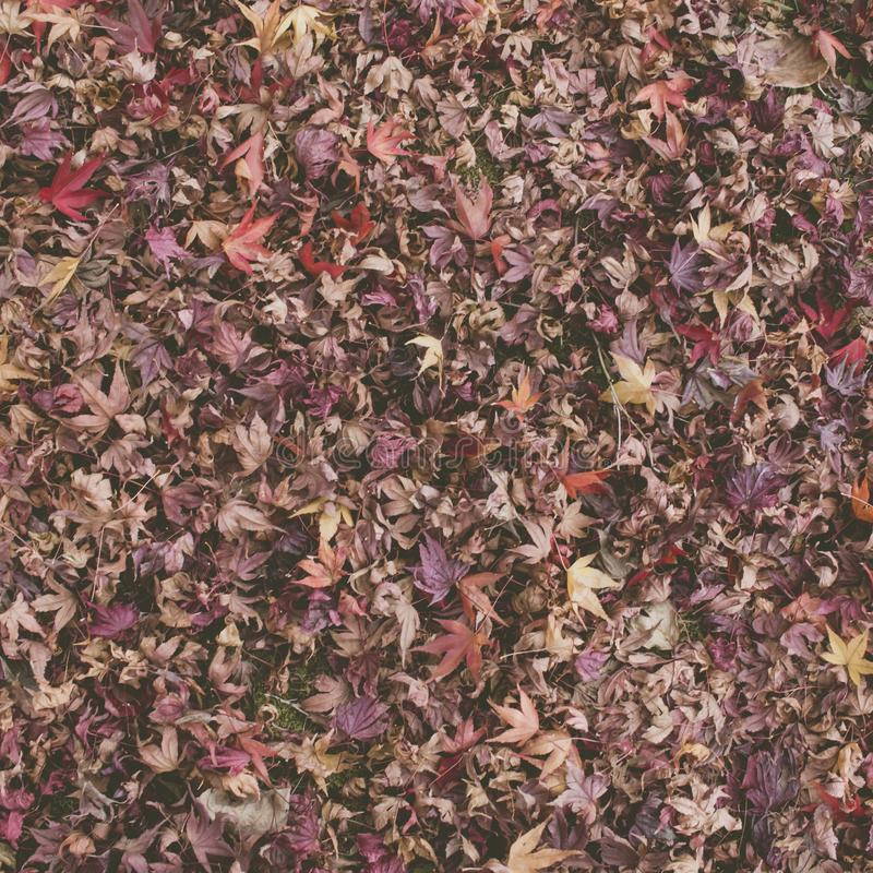 High angle view of autumn dry leaves royalty free stock photos