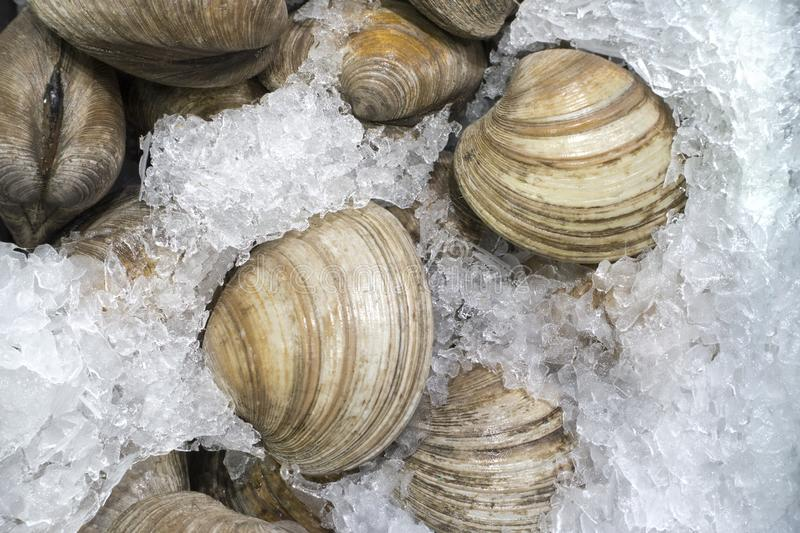 Fresh clams on ice for sale at the fish market stock photo