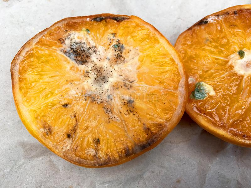 High angle view of halved rotten orange. On gray paper stock image