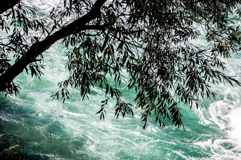 High-Angle View of Tree Hanging over Rushing River. Silhouette of tree hanging over rushing Niagara River royalty free stock photography